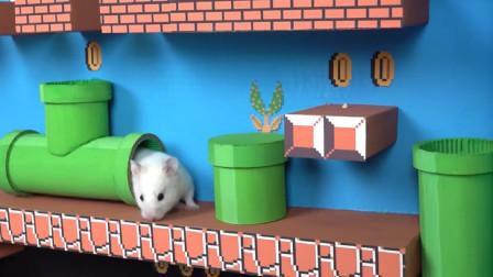 小仓鼠第一次玩超级玛丽游戏,简直太好玩了!