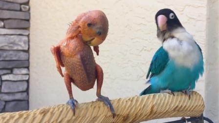 羽毛被拔光的鹦鹉,站在竿子上和主人叫嚣,都被撸秃了,还来?
