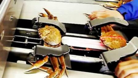 实拍螃蟹加工流水线,活的放进去出来直接变蟹肉,吃货看完流口水