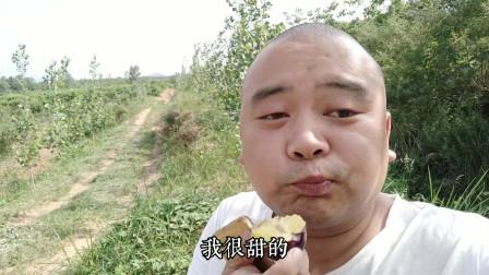 湖北随州:去无人打理的果园,遇上好货,山哥一口气吃了七个