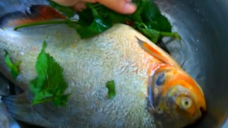 农家美食日记:清炖鲳鱼,鲳鱼最美味的做法,鱼肉鲜嫩鱼汤下饭!