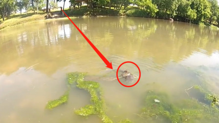一条鱼儿正向岸边游来,渔民们看清后,有些同伴扔掉手机就跑!