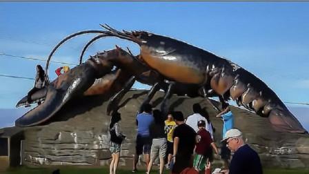 国外有只龙虾活了一个世纪,国家颁布了免死金牌,吃货只能看不能吃