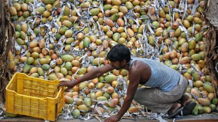 印度水果泛滥成灾,中国吃货很羡慕,看完吃法却无法下口!