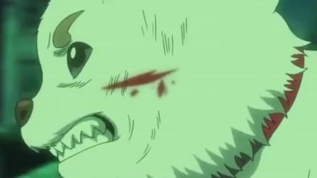 银魂:定春被敌人重伤,银时霸气登场,一脸认真的样子真帅