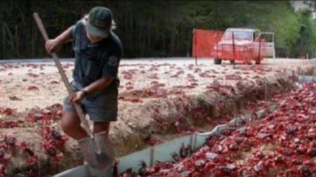 比利时大闸蟹泛滥成灾,当地人苦不堪言,中国吃货:放着我来!