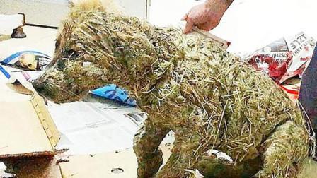 男子泥溏里捞出一只小狗,洗干净后,吓得立马报警