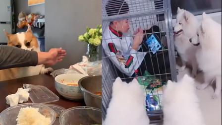 """高手过招!摊上个吃货狗狗主人各种花式偷吃食物""""步步惊心"""""""