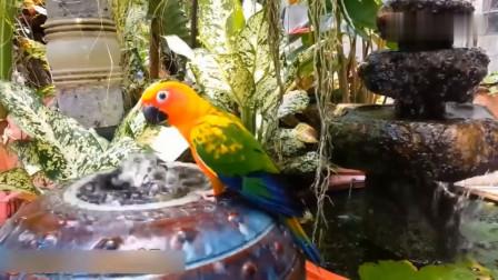 这年代鹦鹉洗澡都用大缸了吗,真的是太奢侈了