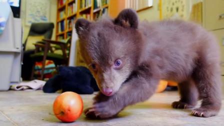 奶奶捡到一只小黑熊,养了十年舍不得放生,孙子回家后瞬间傻眼
