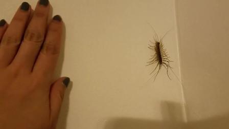 如果家里进了这种虫子,千万要重视了,它可能对你的生活很有帮助