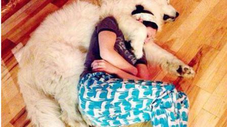 很多女人养狗,为什么更喜欢公狗?过来人说出原因!