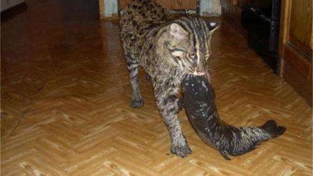 女子捡回一只猫,长大后经常抓鱼回家,跟踪之后发现不得了