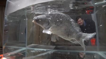 零下190度的液氮究竟有多厉害?看这条鱼的下场,你就明白了!