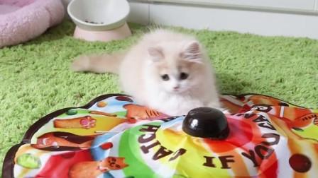 女主人熟练剪毛,猫猫反抗不成便开始享受!