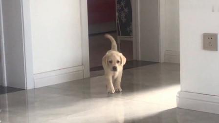 小奶狗第一次去打針,被嚇懵的表情,簡直太萌了!