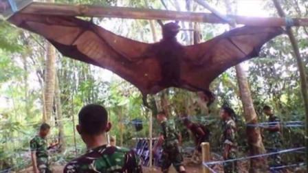 国外村民抓到巨大生物,以为抓住了翼龙,专家鉴定后原来是猴子