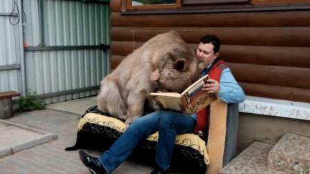 """俄罗斯夫妇捡了一只小熊,养了20年后,已经没一点""""熊样""""了"""
