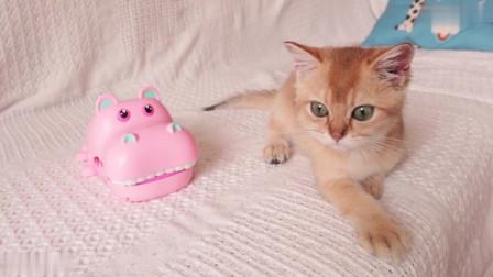 当着猫的面玩玩具,主人剧烈的反应,猫都吓蒙了