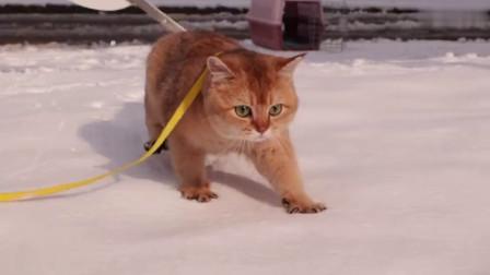 第一次見到雪的貓,開啟了咆哮模式,抱著主人不撒手