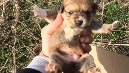 刚出生没多久的狗宝宝被人丢弃了,遇上好心人了
