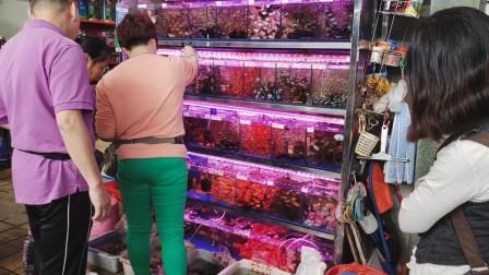 观赏鱼不是撑死的,但是也跟饲料有关,学会喂食方法很重要