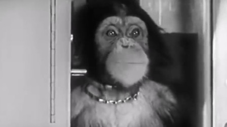 当年被美国送上太空的猴子,时隔50年,如今才得知其中真相!