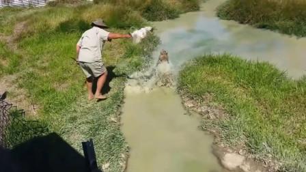 澳洲不允许人靠近浅水滩,大叔偏不信,随后画面让人窒息