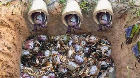小伙自己在河边布置的陷阱竟抓到这么多螃蟹,真是学到了