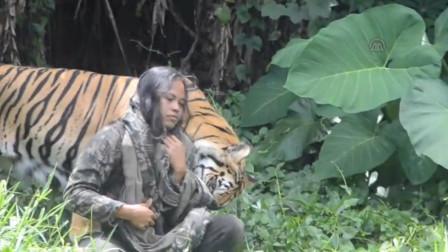 女子放生老虎,5年后相遇,不料意外发生,镜头拍下全过程!