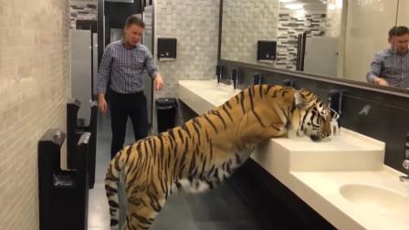 小伙厕所偶遇老虎,本以为是恶搞,不料接下来一幕惊呆众人!
