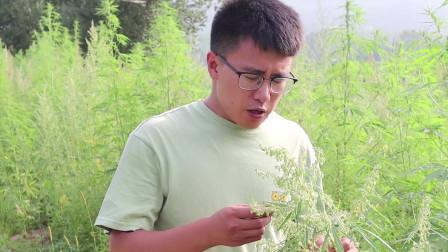 农村小伙去田间寻找美食,这种美食竟有如此多效,让人难以置信!