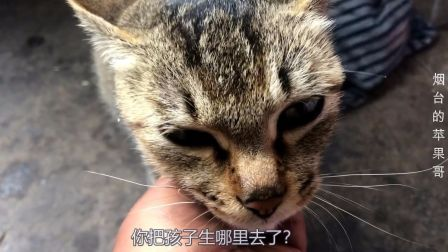 大猫偷偷地生下小猫,沙雕铲屎官竟然不知道生在哪!