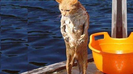落水的猫咪,既可怜又可爱