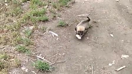 出门锄草遇上了一只小奶狗,俺不想让它变成流浪狗,太可怜了