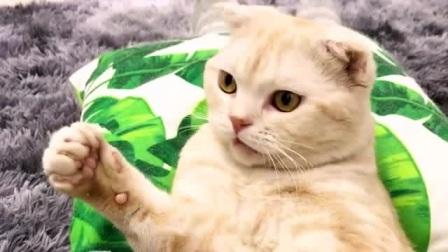 主人问猫咪她有什么优点,小猫咪说是漂亮, 没想到下一句就挨打了