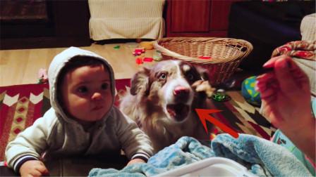 妈妈教宝宝说话,宝宝一直学不会,狗狗开口太惊艳了