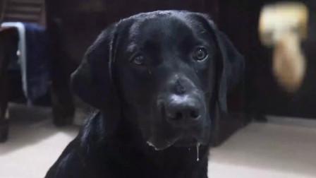 主人让狗狗在美食面前一动不动,结果狗狗不停的流口水
