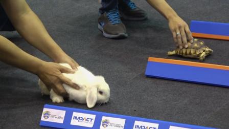 现实版龟兔赛跑,乌龟用事实证明了,兔子当年输得真不冤!