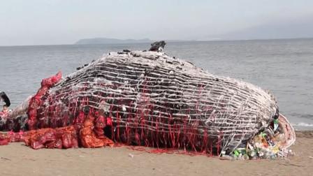 """海边出现庞然大物,竟是一头""""鲸鱼尸体"""",引起人们的深思"""
