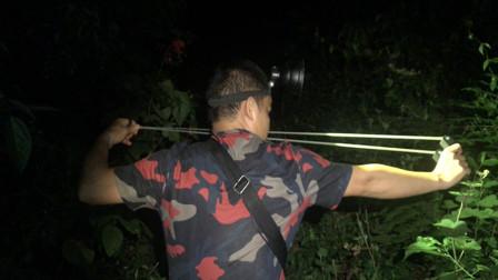 农村小伙弹弓打野,一晚上遇到的野货真不少了,这种野货你敢吃吗