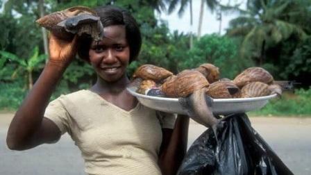 险些被非洲人吃灭绝的生物,只能靠人工养殖,中国吃货却怂了!