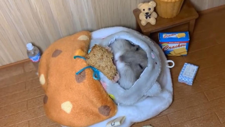 就连睡觉的时候都闲不住嘴,仓鼠实在太能吃了