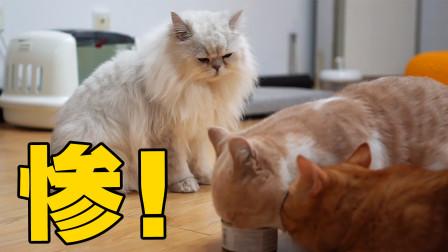 食物链底端的猫是如何生存的?