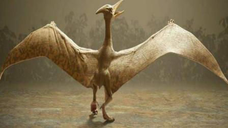 恐龙真的从地球上彻底消失了?如今这些生物或许就是它们的后裔