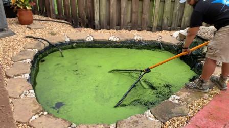一池绿水里有什么东西?老外撒网打捞,网友:它们是如何活下来的