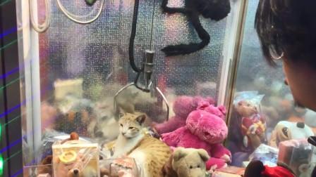 娃娃机里出现一只猫咪,男子一爪子下去,下一秒请憋住不要笑