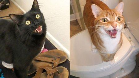 你一定不知道的7种猫咪叫声的意思