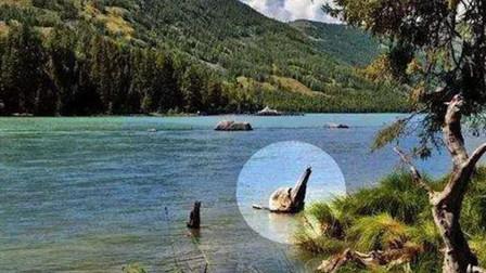 """新疆的喀纳斯湖""""水怪""""被证实,动物被吞吃,镜头拍下这一幕"""
