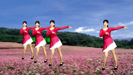 入门32步广场舞视频《荞麦花》 阿彩广场舞网红健身操
